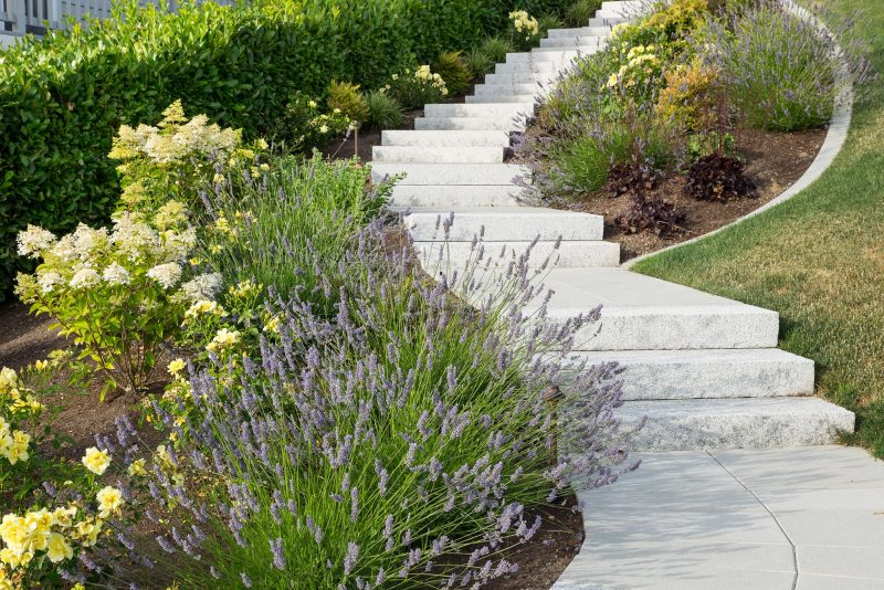 Landscape architecture with stone step path, bordered with lavender and local vegetation