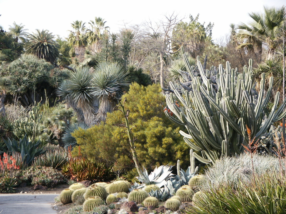 Keep Your Yard Colorful with Drought Tolerant Plants