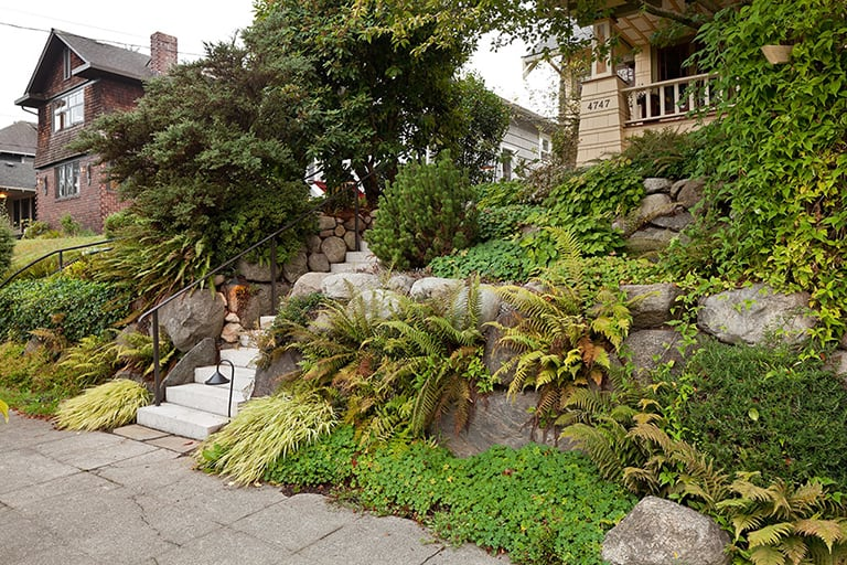 Landscape architecture, new cement stairs with native plants and rock walls